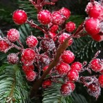 red-christmas-berries-67154_640